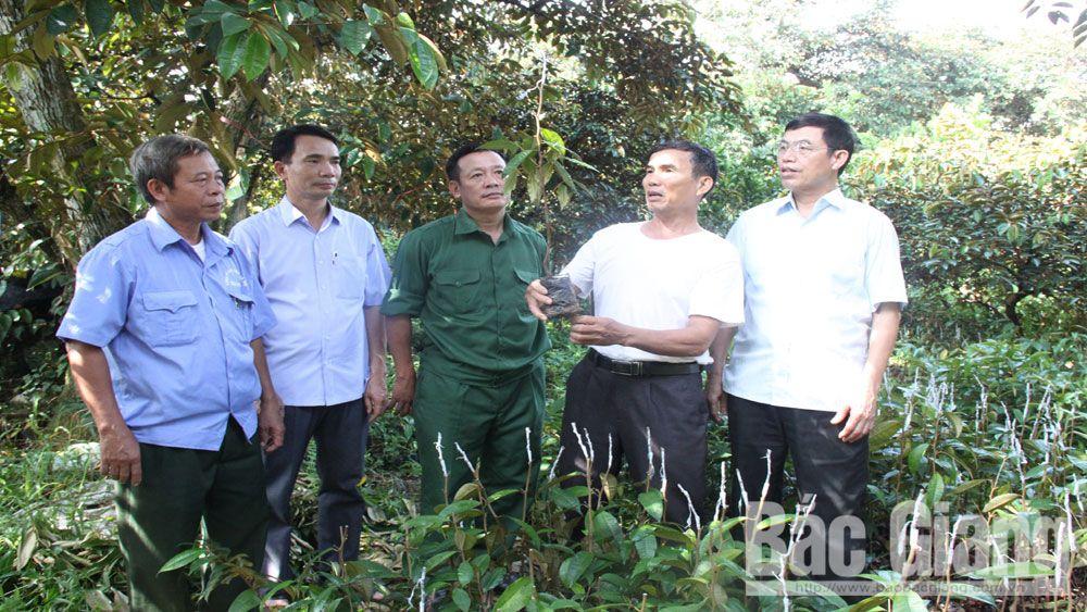 Bắc Giang: Lan tỏa phong trào  cựu chiến binh gương mẫu